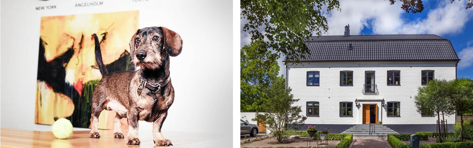 hunden-venstre-hus-fond-forsakring-header